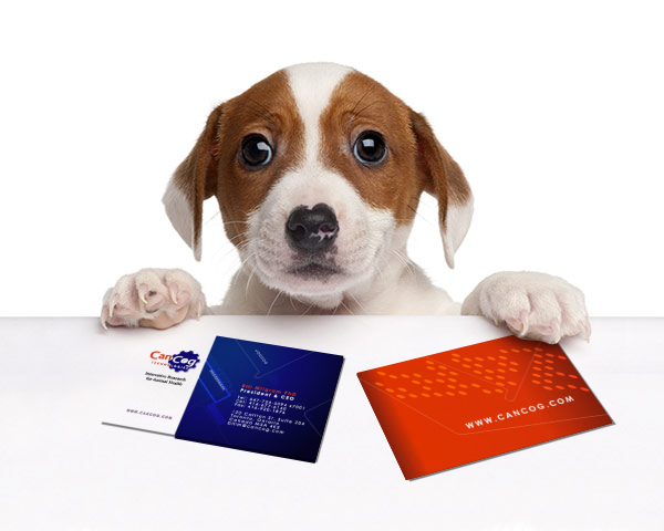 Business cards created as part of a brand re-structure for CanCog technologies.  The designs fit with CanCogs innovative and modern approach to animal health and science.